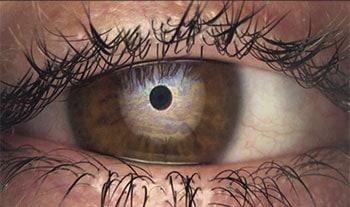 Analyse Lipidschicht Tränenfilm